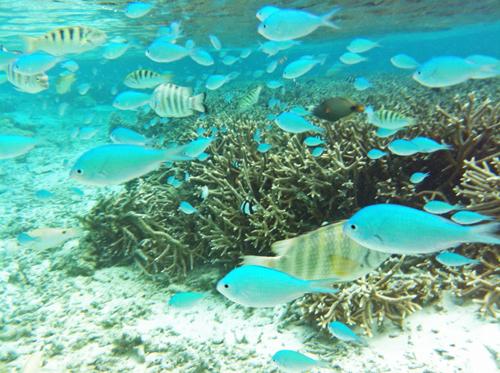 guamfish