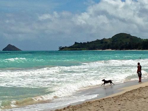 犬とカイルアビーチ