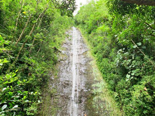 マノアの滝(ハワイ)