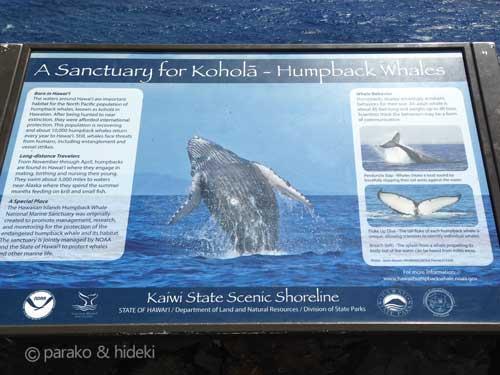 マカプウのザトウクジラ
