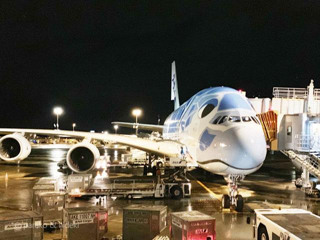 フライングホヌ A380