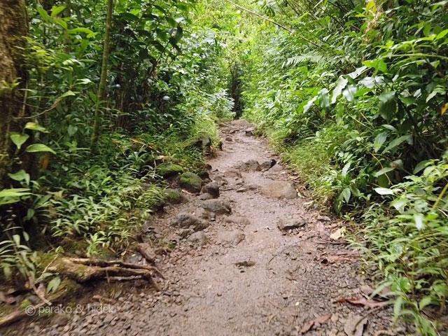 マノアの滝トレイルのコース